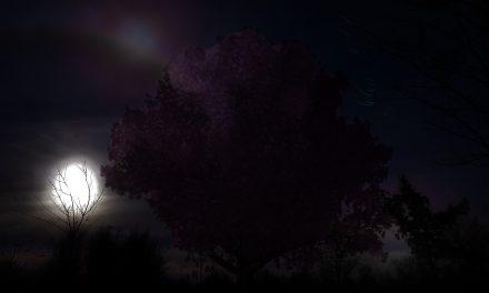 Forest of Lanterns