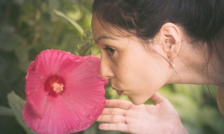 Hibiscus Granita